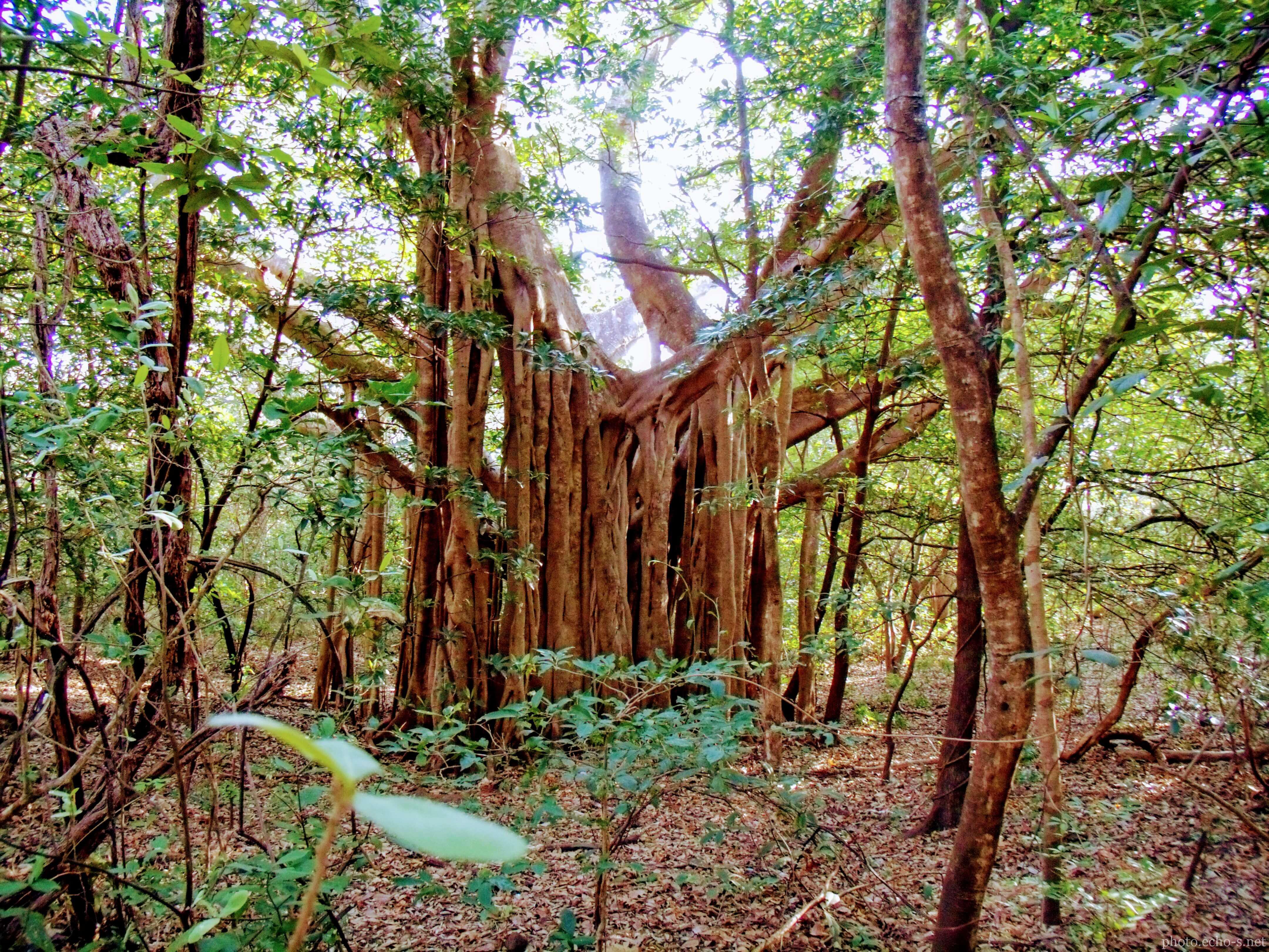 コスタリカ共和国 サンタ・ロサ国立公園