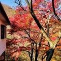伊香保温泉 湯元通り 紅葉
