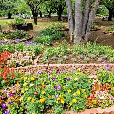 浜町公園 中央区立総合スポーツセンター前 花壇