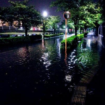 新浦安 さくら通り 大雨