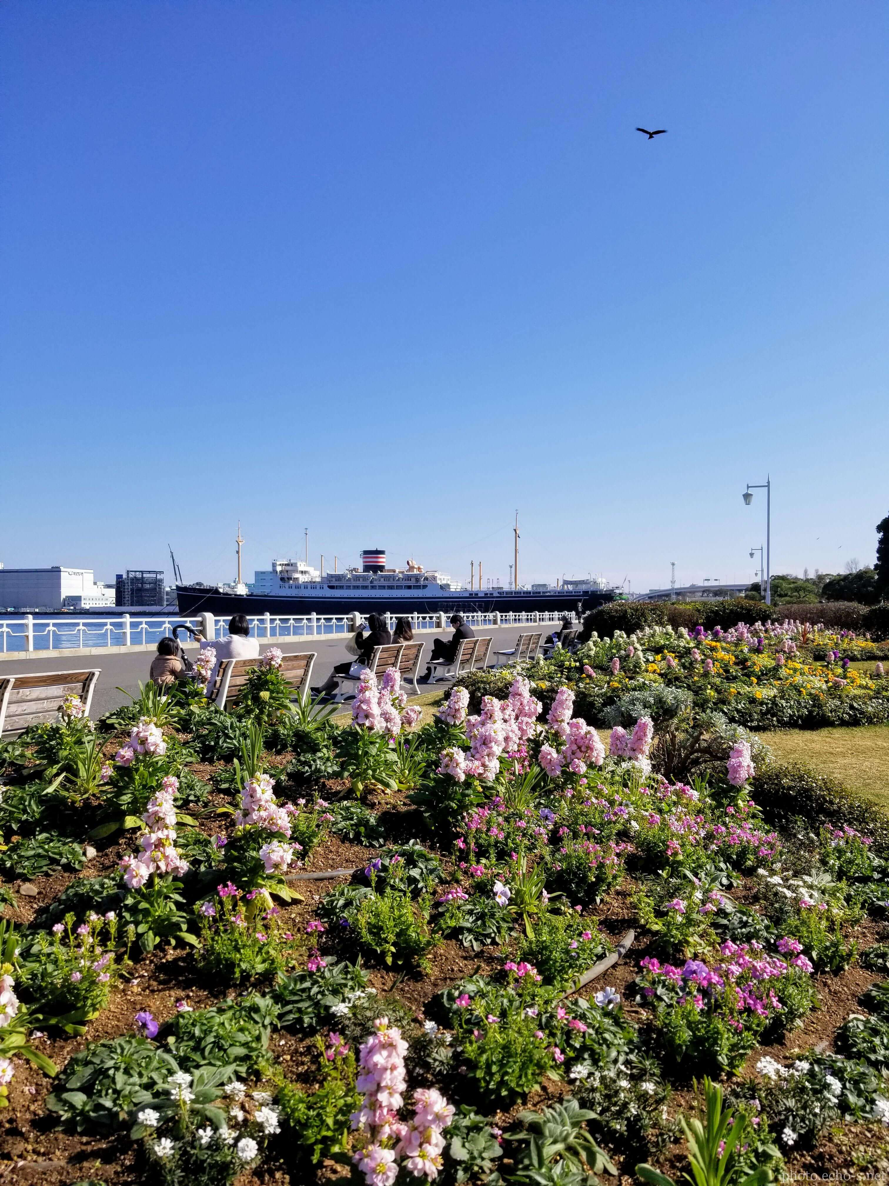 横浜 山下公園 花壇