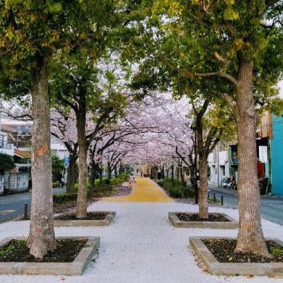 浦安 富士見 しおかぜ緑道
