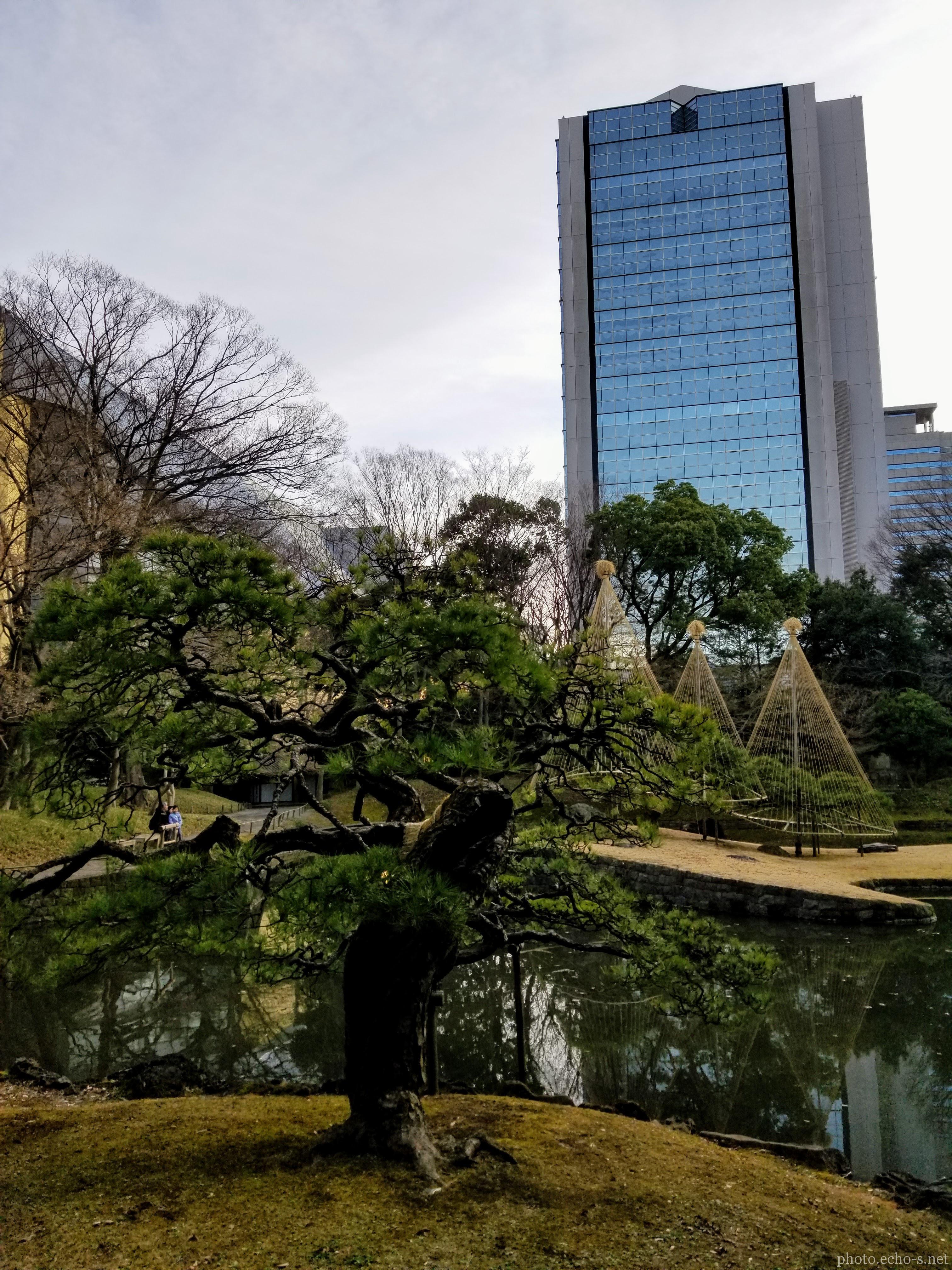 小石川後楽園 内庭 五葉松 住宅金融支援機構本店ビル