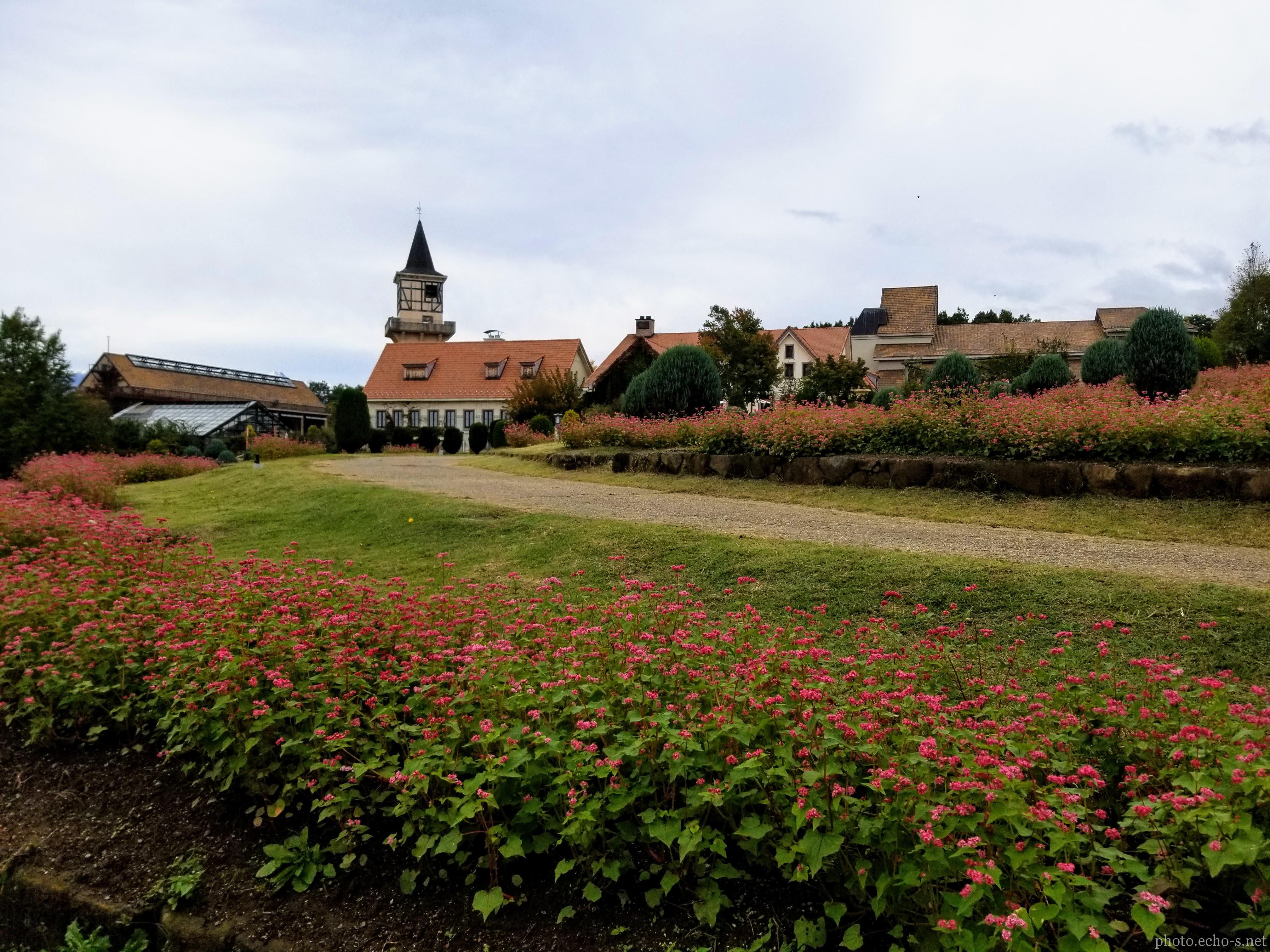 山梨 北杜市 ハイジの村 赤そばの花