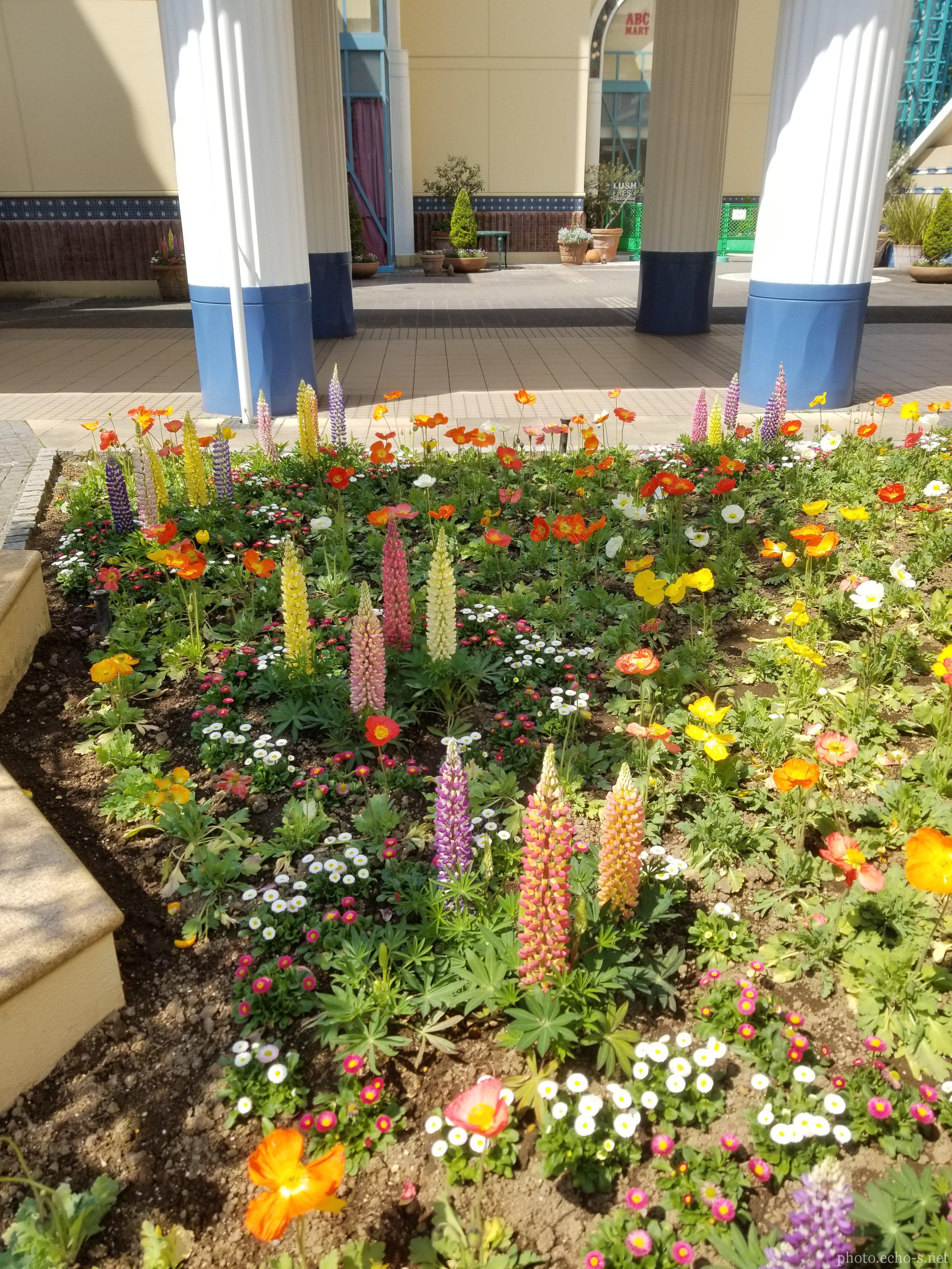 舞浜 イクスピアリ ディズニーアンバサダーホテル中庭 花壇