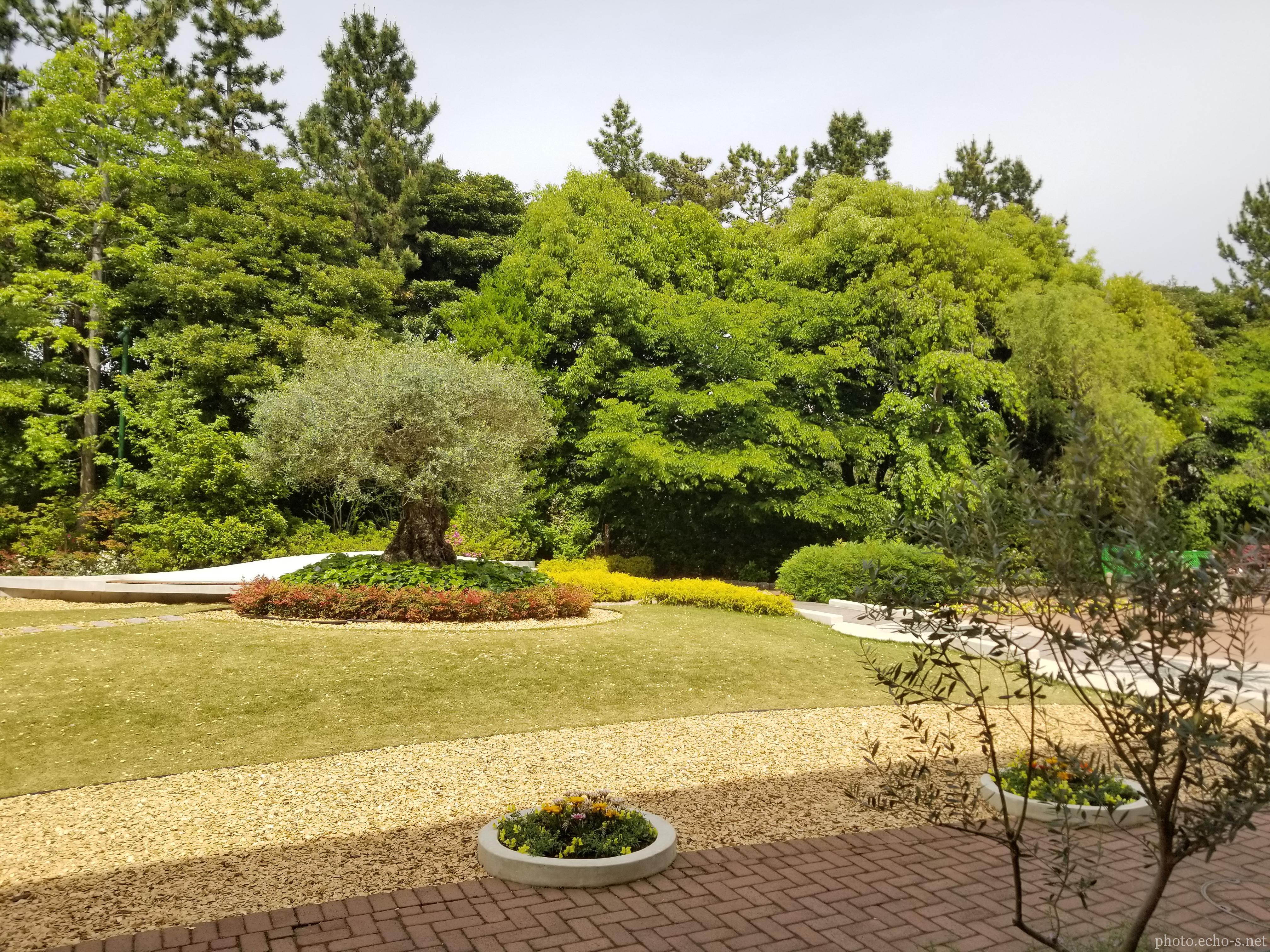 舞浜 イクスピアリ ガーデン・サイト オリーブと噴水の広場
